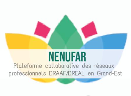 Illustration article NENUFAR la plateforme des métiers DRAAF – DREAL en Grand-Est